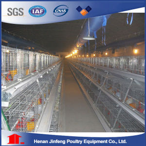 Jinfeng Birds Cage for Sell / Chicken Raising Layer Cages Jaulas Pollos pictures & photos
