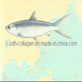 GMP, Top Collagen, 100% Natural Golden Milkfish Collagen Peptide Anti-Ageing Skin Care pictures & photos