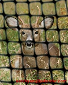Deer Netting Trellis Netting Garden Netting pictures & photos