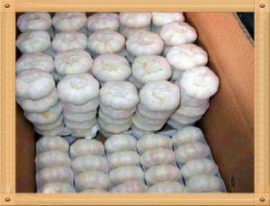 2015 New Crop Garlic pictures & photos