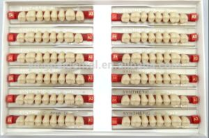 2-Layer Acrylic Teeth for Posterior Packing pictures & photos