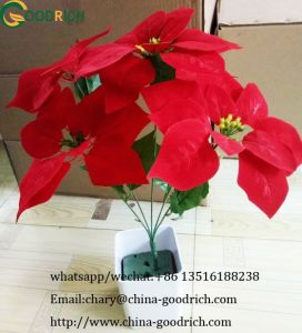 Christmas Flower Poinsettia