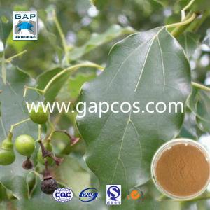 95%-99% Borneol Camphor Leaf Extract Powder