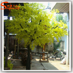 Evergreen Fiberglass Plastic Artificial Ficus Tree pictures & photos