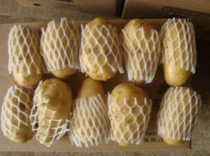 Good Quality Fresh Holland Potato pictures & photos