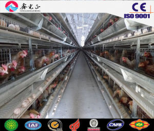 Steel Structure Prefabricated Poultry House, Chicken House with Equipments (JW-16209) pictures & photos