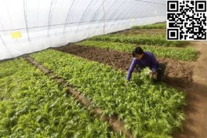 Meyabond Anti-Insects Net, Greenhouse Net pictures & photos