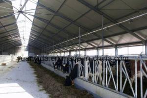 Hot Galvanized Livstock Tool Cattle Headlock pictures & photos