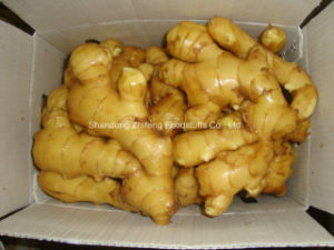 Fresh Ginger with Great Quality and Competitive Price pictures & photos