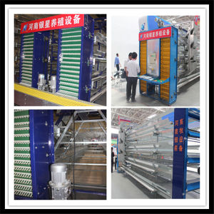 Highest Quality Bird Cage for Hot Sale pictures & photos