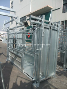 Hot Dipped Galvanized Cattle Squeeze Chute pictures & photos