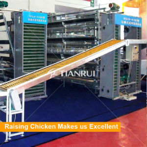 Full Automatic Egg Collect Machine For Layer Battery Cage pictures & photos