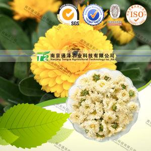 100% Pure Natural Herb Medicine Chrysanthemum pictures & photos