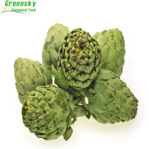 Artichoke Leaf Extract in Herb Extract pictures & photos