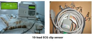 Big Screen One Single Channel Animal EKG Veterinary ECG Machine (V-CM100) pictures & photos