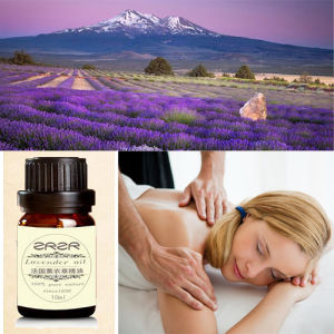 Private Label Organic Nature Lavender Oil pictures & photos