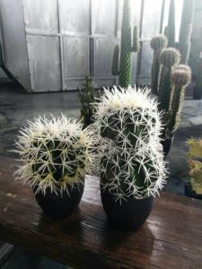 Artificial Plants of Cactus 7 Heads pictures & photos