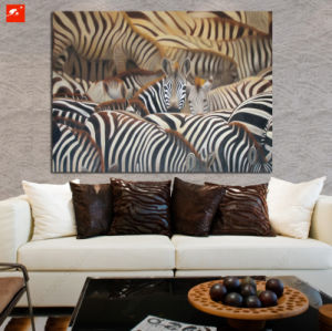 Herd of Zebras Land of Abundance Canvas Print pictures & photos