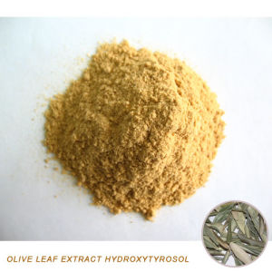Olive Leaf Extract Powder Hydroxytyrosol pictures & photos