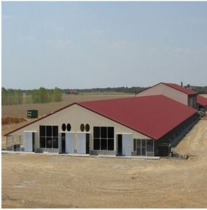 Steel Structure Poultry House pictures & photos