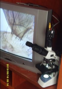 Video Microscope pictures & photos