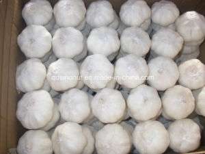 2017 New Crop Chinese Fresh Garlic pictures & photos