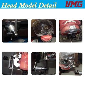 China Wholesale Dental Teaching Aids Emulated Head Model pictures & photos