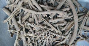 Eleuthero Root pictures & photos