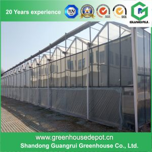 China Supplier Multi-Span PC Sheet Agriculture Green House for Sale pictures & photos