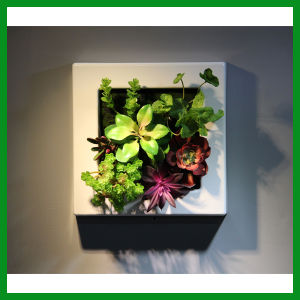 FO-WR29 Modern Artificial Vertical Plants Art pictures & photos