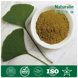 Ginkgo Biloba Extract for Hot Sale
