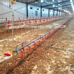 Good Quality Automatic Poultry Farm Machinery with Matching Prefab Shed Construction pictures & photos