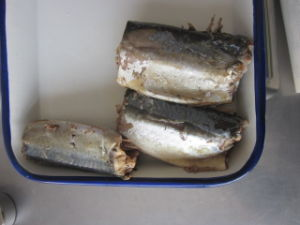 Mackerel Fish in Brine or Tomato Sauce Slsi
