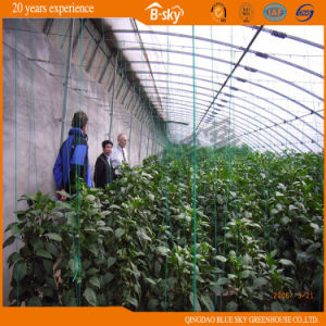 Plastic Film Solar Greenhouse Used for Vegetable Planting pictures & photos