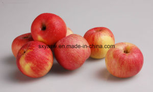 High Purity Apple Extract 98% Phloretin pictures & photos