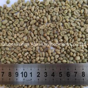 Chinese Arabica Green Coffee Bean