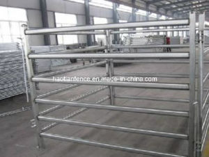 Hot Dipped Galvanized Livestock Cattle Panels pictures & photos