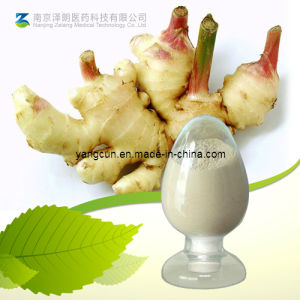 Ginger Root Extract Gingerol (CAS: 23513-14-6) pictures & photos