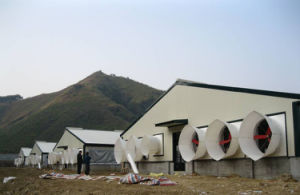 Steel Structure Pig House/Poultry House From China pictures & photos