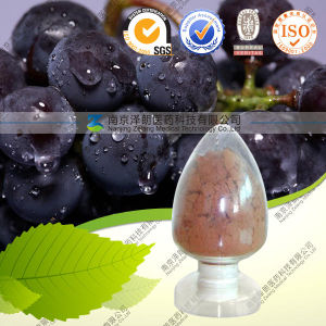 High Quality Natural Grape Seed Extract Grape Seed PE pictures & photos
