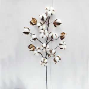 L75cm Natural Preserved Flower Decoration Artificial Flower Christmas Decorations pictures & photos