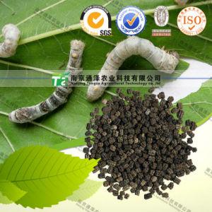 for Migrainehigh Quality Herbal Medicine Silkworm Faeces pictures & photos
