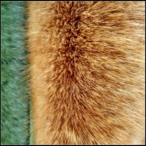 Fake Fur with Christmas pictures & photos