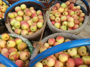 2015 New Crop Gala Apple pictures & photos