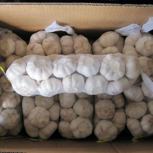 Chinese Normal White Garlic (4.5cm, 5.0cm, 5.5cm, 5.5cm, 6.0cm) pictures & photos