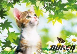 Wholesale Lenticular Art 3D Cat Picture pictures & photos