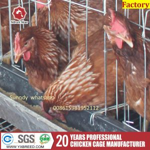 Poultry Farming 1.9X 2.3 Bird Cage for Chicken pictures & photos