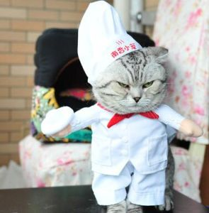 Chef Pet Costume Dog and Cat Clothing pictures & photos