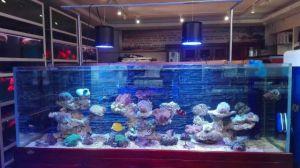 Wholesale Remote Control 60W LED Aquarium Lights pictures & photos