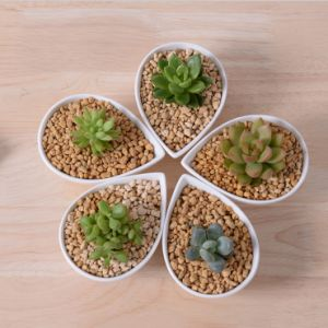 Ceramic White Flower Pot Mini Desktop Furnishing Articles pictures & photos